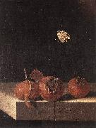 COORTE, Adriaen Three Medlars with a Butterfly zsdgf oil painting picture wholesale