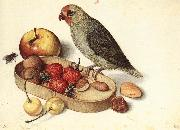 FLEGEL, Georg Still-Life with Pygmy Parrot dfg oil painting artist