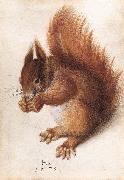 HOFFMANN, Hans Squirrel wf oil painting artist