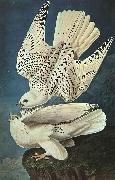 John James Audubon White Gerfalcons oil painting picture wholesale