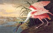 John James Audubon Roseate Spoonbill oil painting picture wholesale
