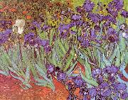 Vincent Van Gogh Irises Sweden oil painting reproduction
