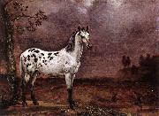 POTTER, Paulus The Spotted Horse af oil painting picture wholesale