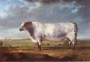 Thomas Alder A Prize Bull oil painting picture wholesale