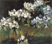 William Stott of Oldham White Rhododendrons oil painting picture wholesale