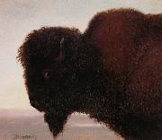 Albert Bierstadt Buffalo Head oil painting picture wholesale