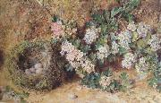 William Henry Hunt,OWS Chaffinch Nest and  May Blossom (mk46) oil painting artist