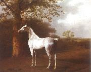 Agasse, Jacques-Laurent White Horse in Pasture oil
