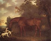 Clifton Tomson A Bay Hunter and Two Hounds in A Wooded Landscape oil painting artist
