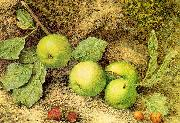 Hill, John William Still Life with Fruit and Fly oil painting picture wholesale