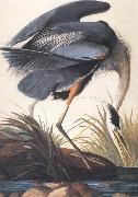 John James Audubon Great Blue Heron oil painting artist