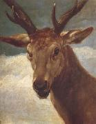 Diego Velazquez Tete de Cerf (df02) oil painting picture wholesale