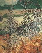Vincent Van Gogh Thistles (nn04) oil painting picture wholesale