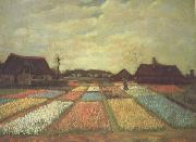 Vincent Van Gogh Bulb Fields (nn04) oil painting picture wholesale