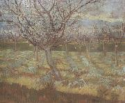 Vincent Van Gogh Apricot Trees in Blossom (nn04) oil painting picture wholesale