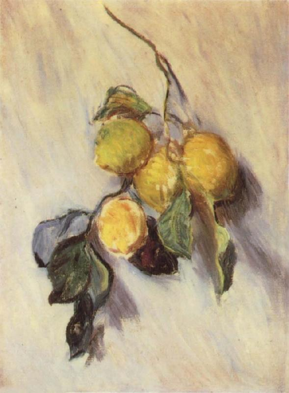 Claude Monet Branch from a Lemon Tree oil painting picture