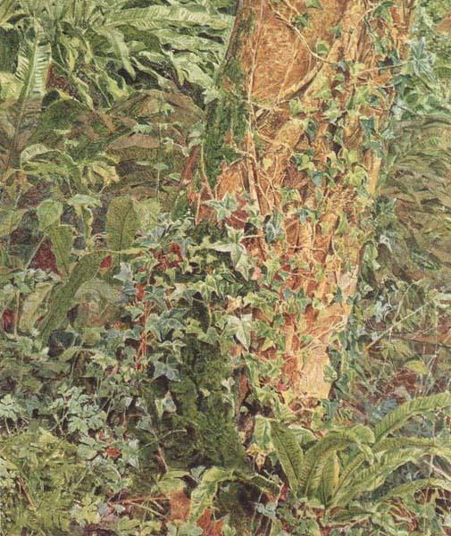 Albert Joseph Moore,ARWS Study of an Ash Trunk (mk46) oil painting image